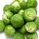 Brussel Sprouts (MX)
