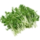 Pea Shoots (Packaged)